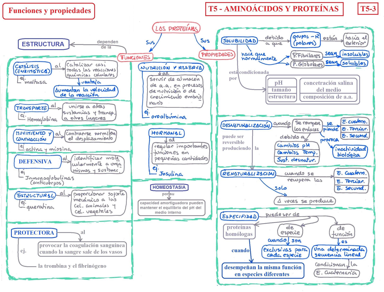 Tema 05 Los Aminoácidos Y Las Proteínas Porfolio De
