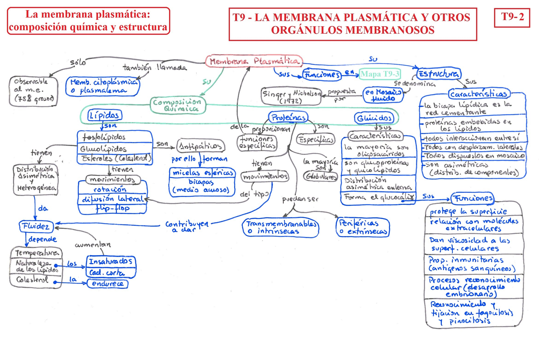 T09 La Membrana Plasmática Y Otros Orgánulos Membranosos B
