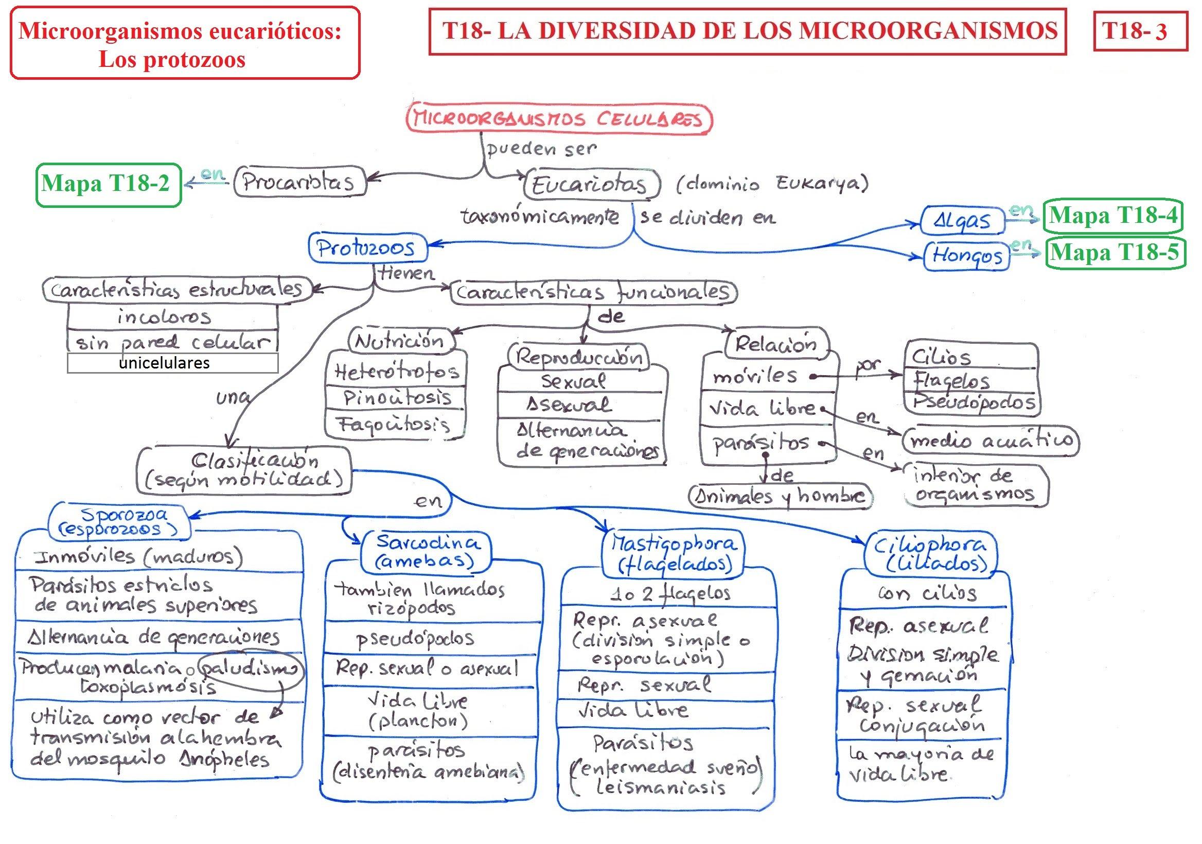 T18 La Diversidad De Los Microorganismos B I O L O G I A