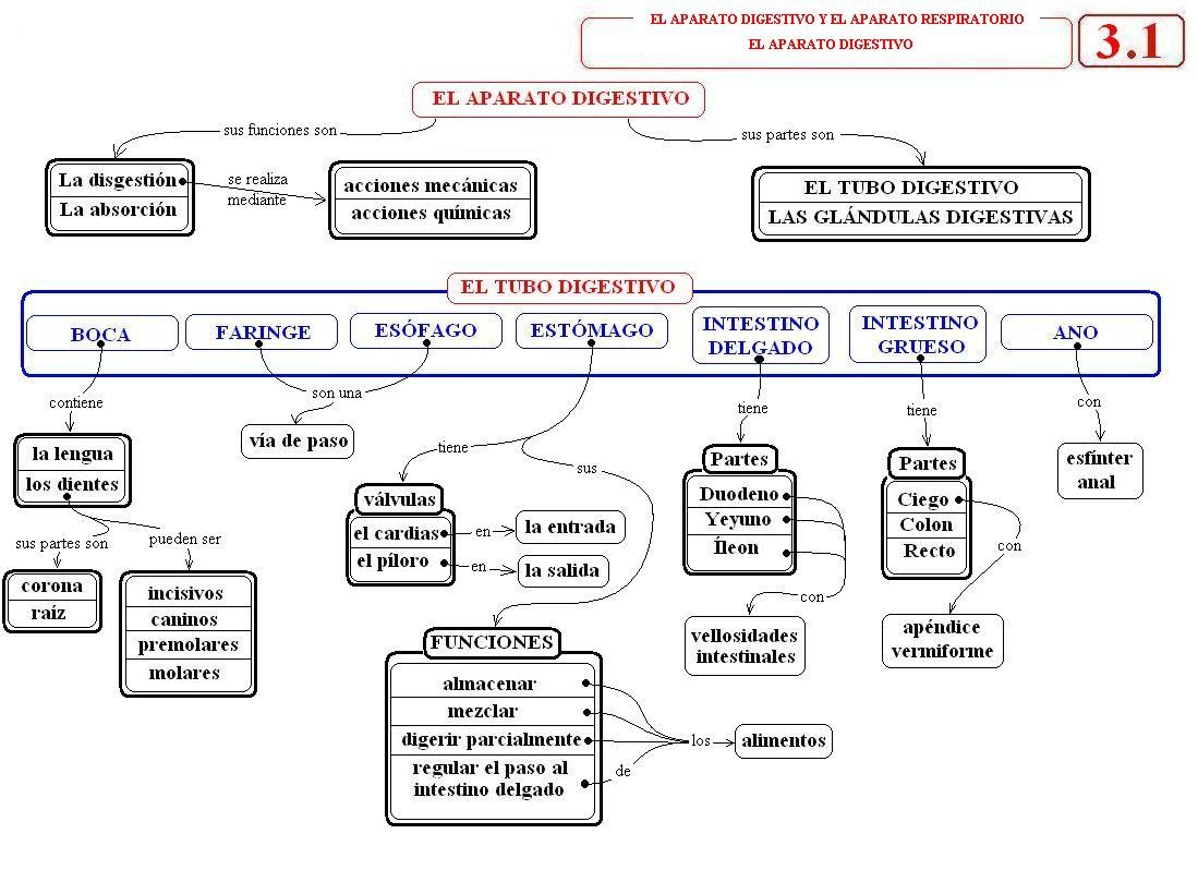Mapa Conceptual Aparato Digestivo.Tema 3 El Aparato Digestivo Y El Aparato Respiratorio Juan Ortiz Ortiz