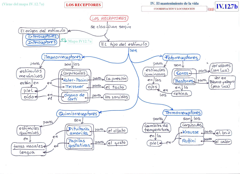 Aprender Es Divertido El Aparato Locomotor Mapa Conceptual