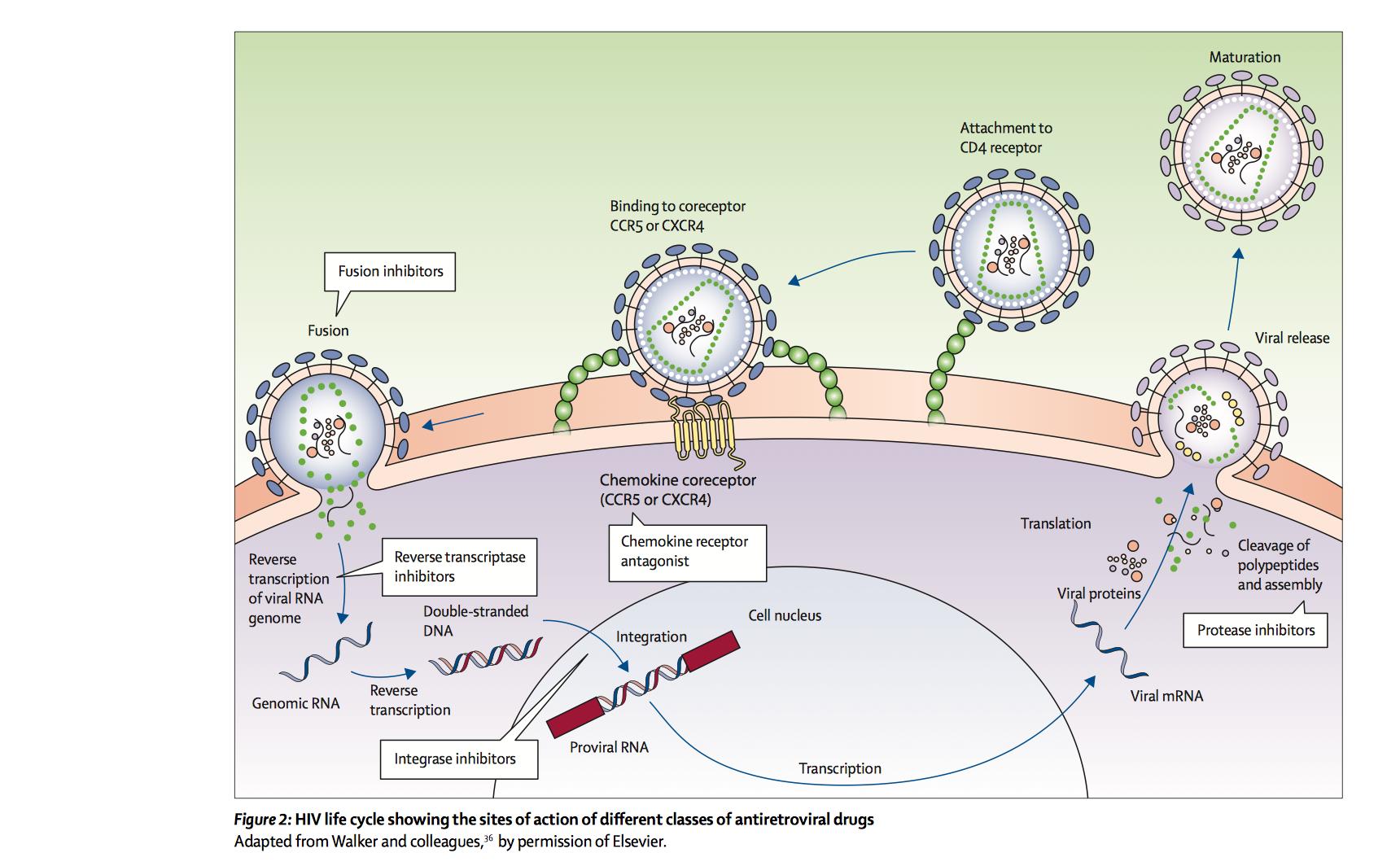 HIV Basics - IM Reference