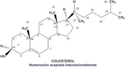 Derivados Del Colesterol ácidos Biliares Y Hormonas Esteroides