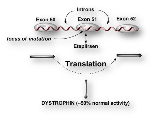 Image result for EXONDYS 51 (Eteplirsen) image