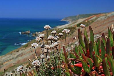 imatge estreta de http://flickrcc.net/