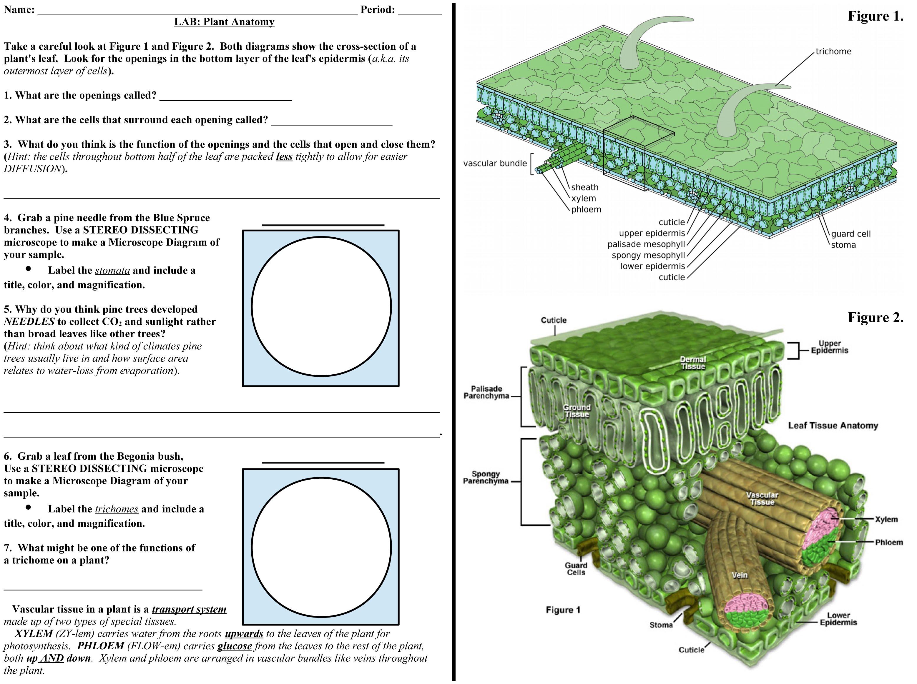 Plant Anatomy Lab 2557324 Togelmayafo