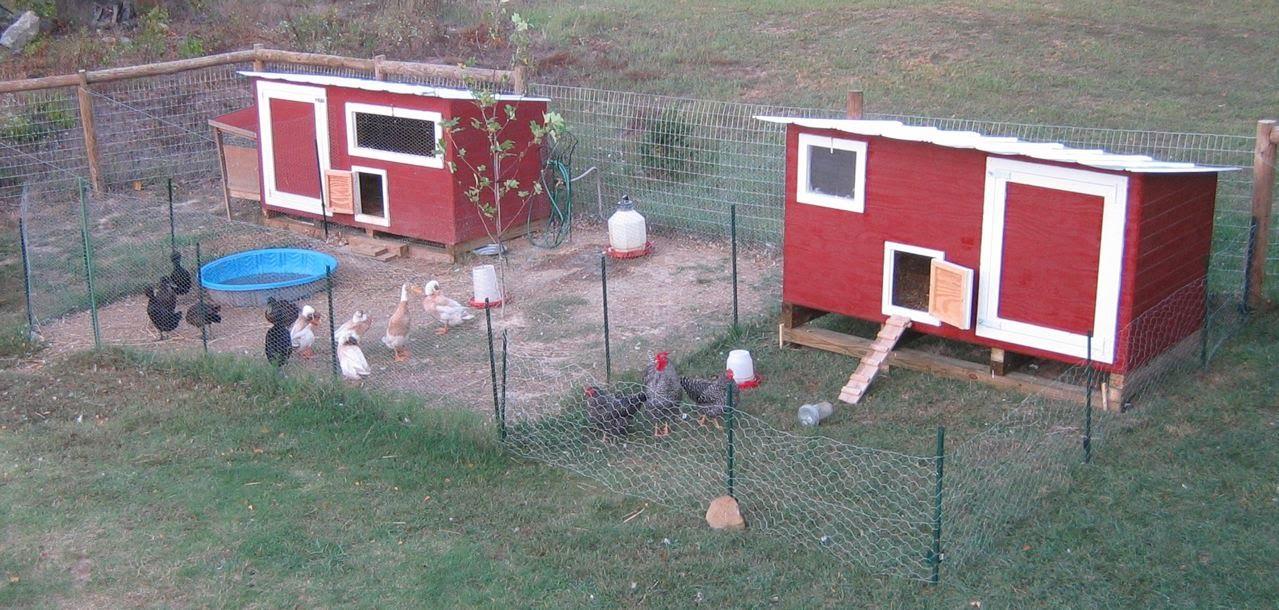 Basic Duck House Plans