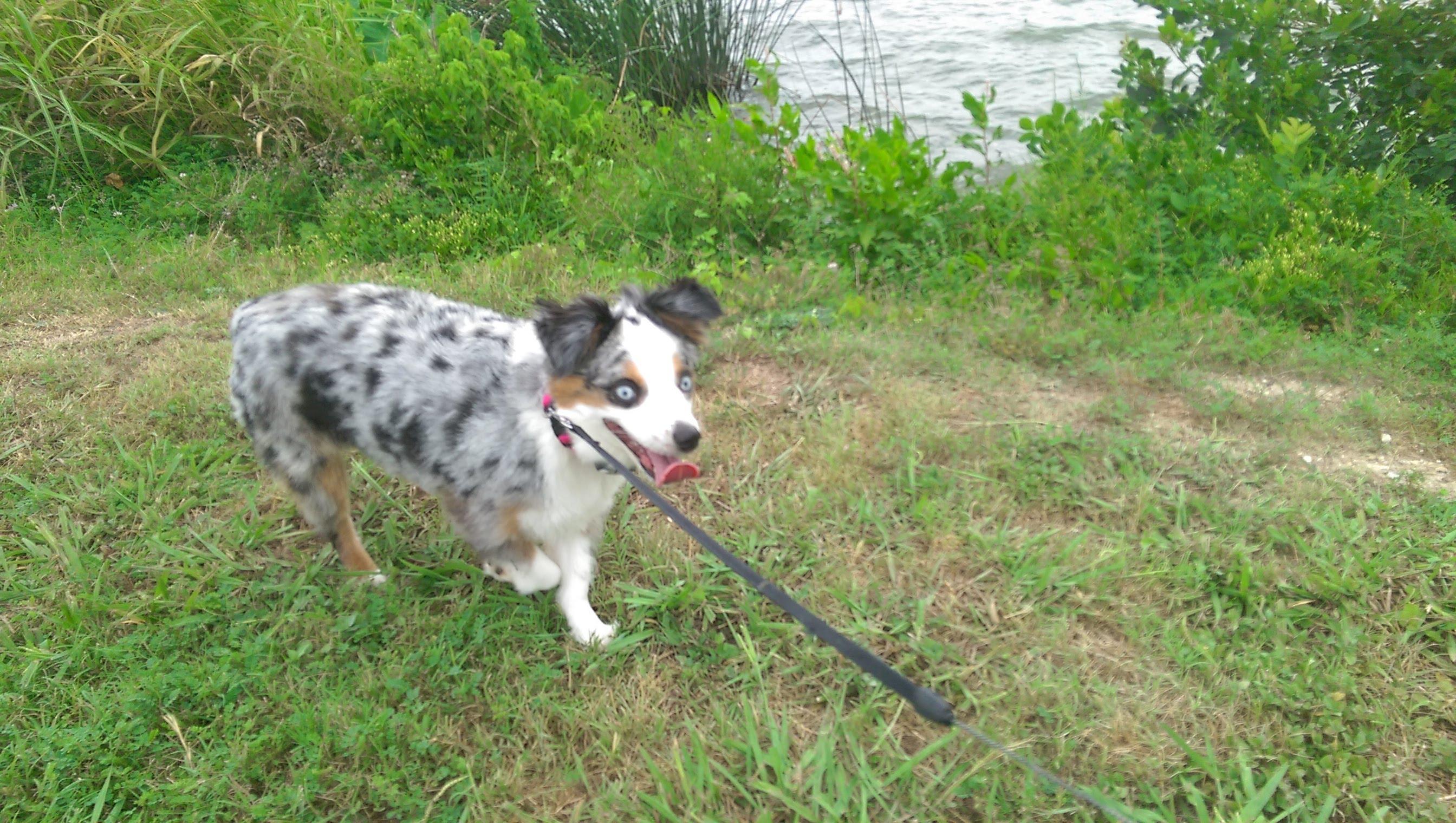 Dallas Dog Walker at White Rock Lake