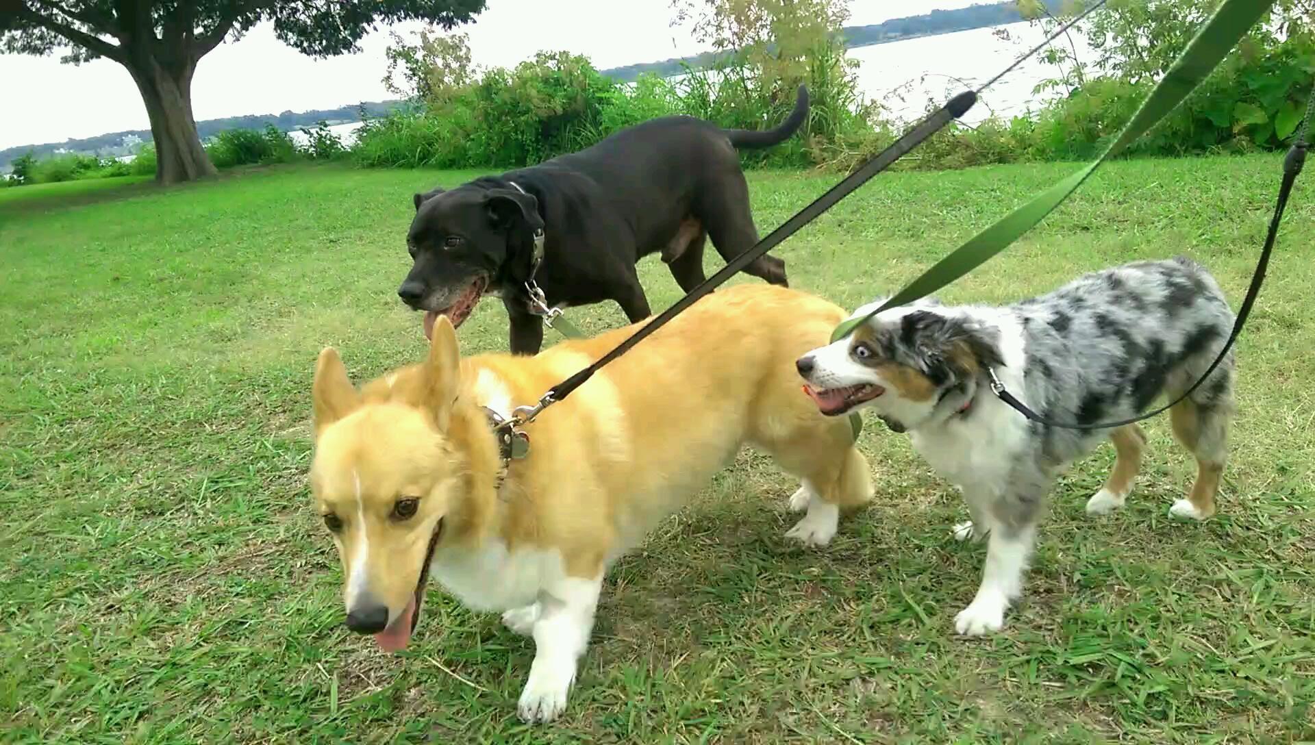 Dallas Dog Walking White Rock Lake