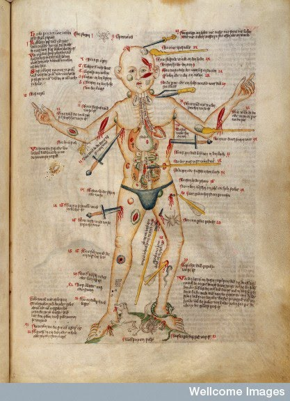 Introduction To The History Of Medicine Hist3321 Brian Regal Phd
