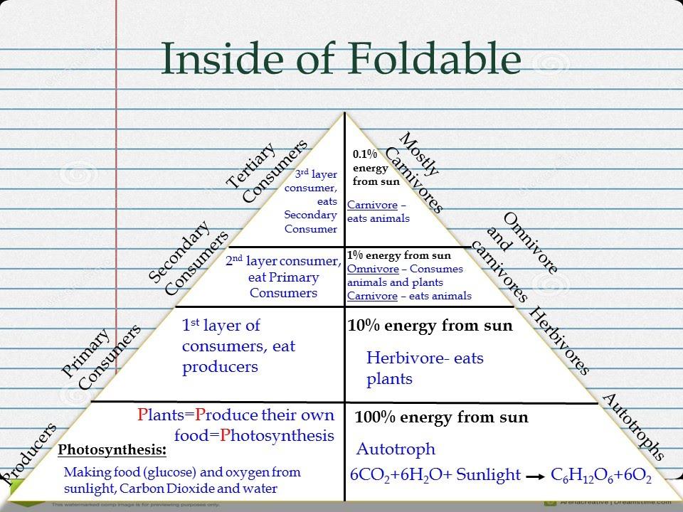 Energy Pyramid Food Web Running Brushy 7th Grade Science