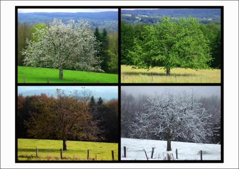 Chapitre 1 l 39 occupation de l 39 environnement par les tres vivants au cours des saisons svt - Printemps ete automne hiver et printemps ...