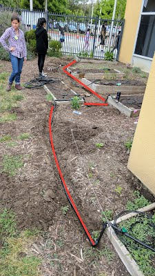 red lines mark where irrigation lines are burried