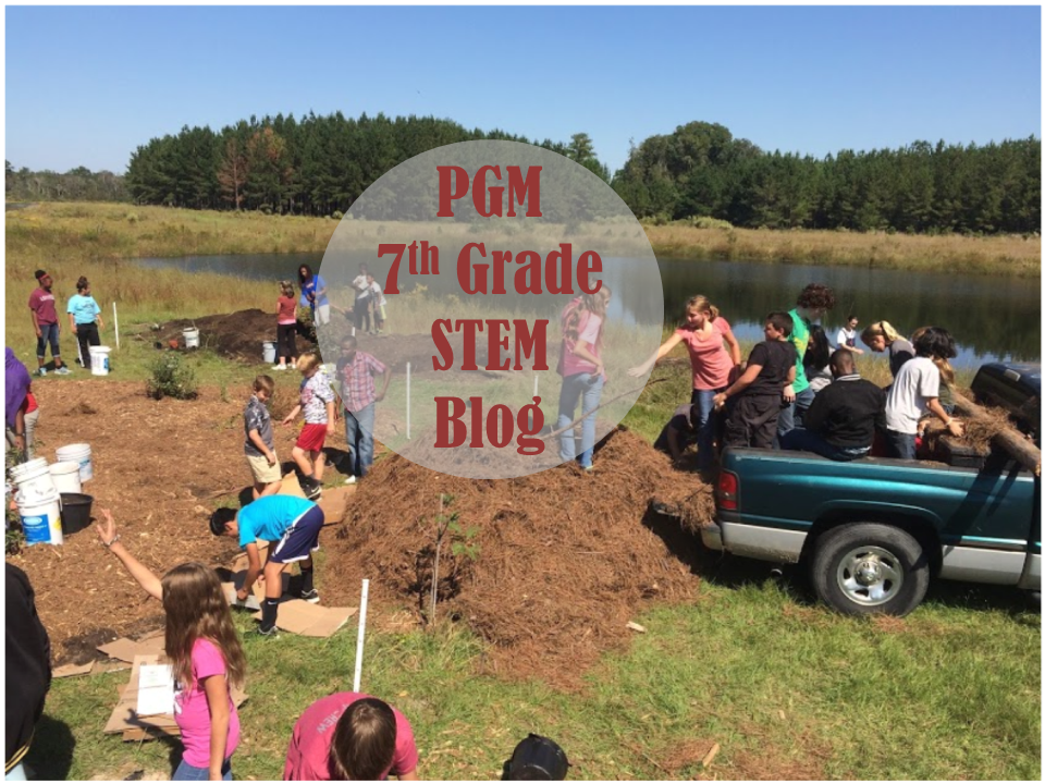 PGM STEM Blog