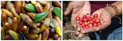 Acorn and Native Cherry Processing Workshop