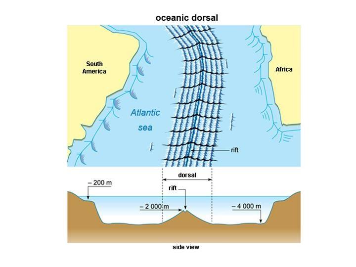 tectonic plates worksheet