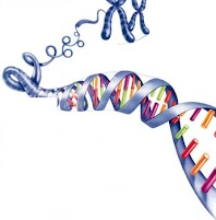 This Page Will Be Updated As We Move Through The Unit Genetics And Heredity