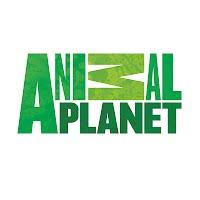 http://www.animalplanet.com/wild-animals/
