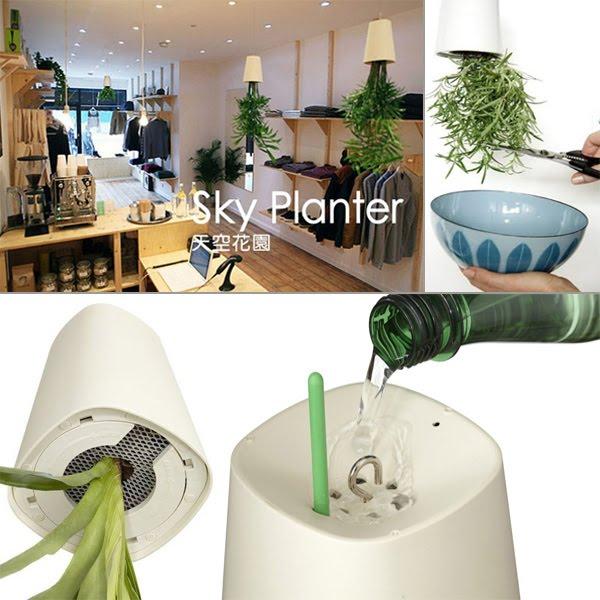 Resultado de imagem para como plantar no vaso sky planter
