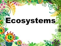 https://sites.google.com/a/nbtschools.org/think-technology/science/ecosystems?pageUrlChanged=ecosystems