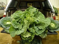 collards and cabbage
