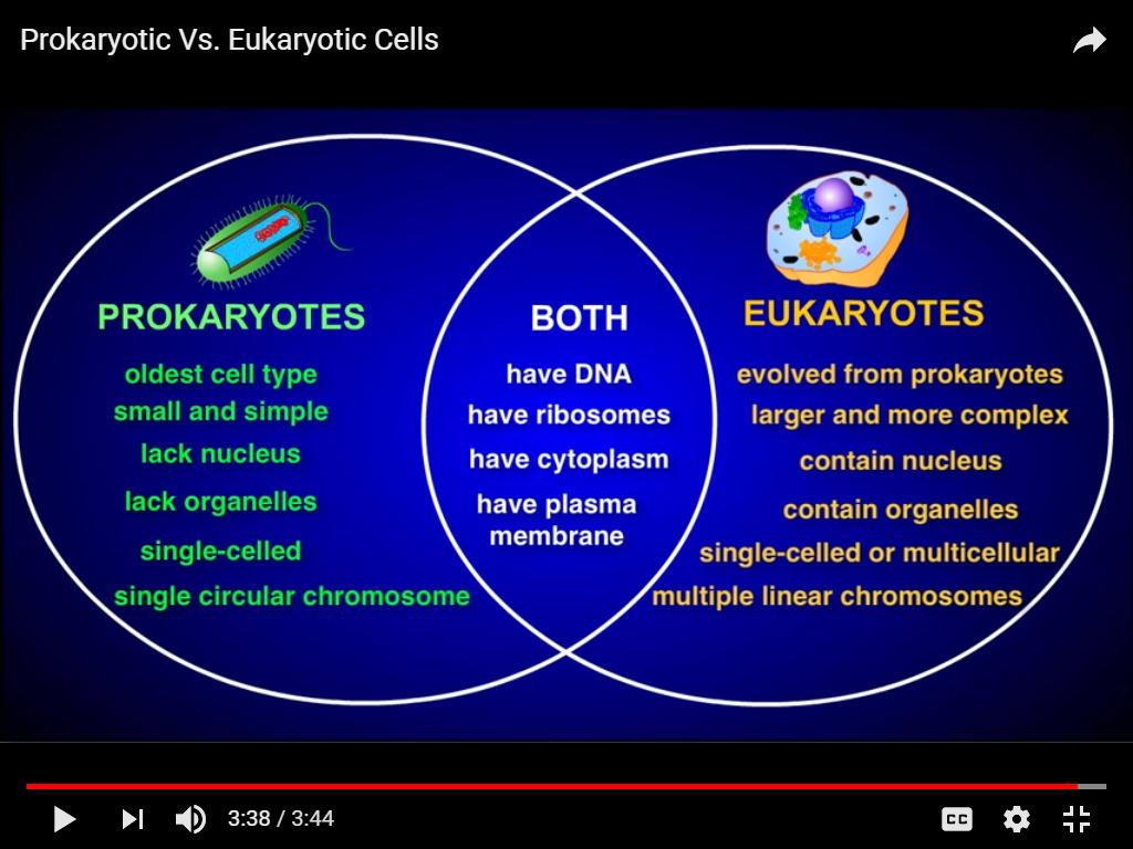 Prokaryotic and eukaryotic cells venn uses of human urine diagram prokaryotic and eukaryotic cells venn prokaryotic and eukaryotic cells venn pooptronica Image collections