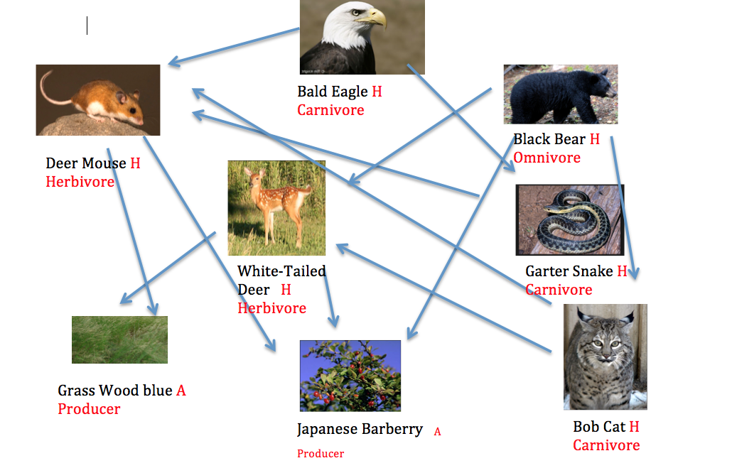 Food Web on Tundra Food Chain Pictures