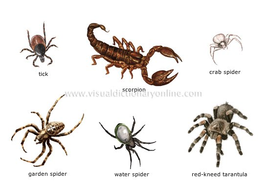 Animal Support System |Examples Of Exoskeleton Animals