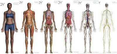 Human body systems ima odongs digital portfolio human body systems is a project lead the way class that is apart of the biomedical science course it involves studying the structures locations publicscrutiny Images