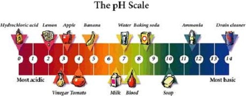 pH Scale and Indicators - Acids and Bases - Vasundhra