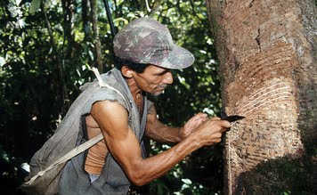 Rubber Tappers Cweaver