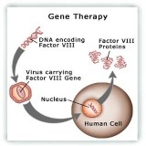 priotities of gene therapy essay Free human gene therapy papers priotities of gene therapy - priotities of gene therapy gene therapy is a the following essay addresses the.