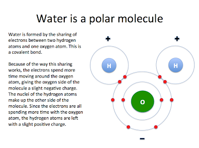 polar and non-polar molecules - tmjh 8th grade science polar easterlies diagram diagram chemistry polar diagrampolar