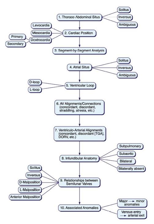 Segmental Anatomy Nomenclature Lai3 Pedscards