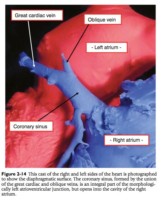 Normal Cardiac Anatomy Pedscards