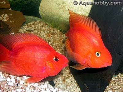 Fun Facts - Parrot Fish
