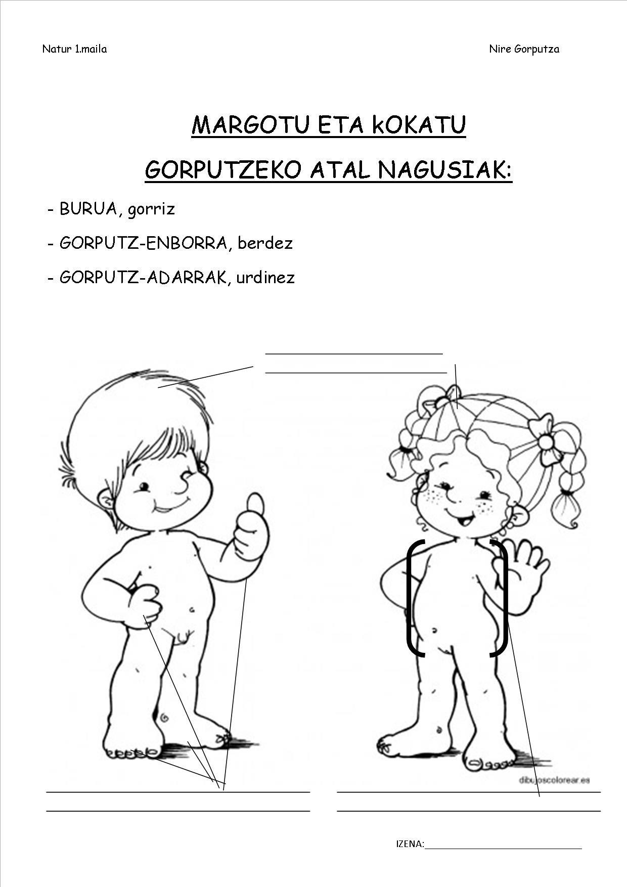 https://sites.google.com/a/presentaciondemaria.org/lehen-hezkuntza-1-maila/2-natur-zientziak/nire-gorputza/GORPUTZ%20ATAL%20NAGUSIAK.jpg