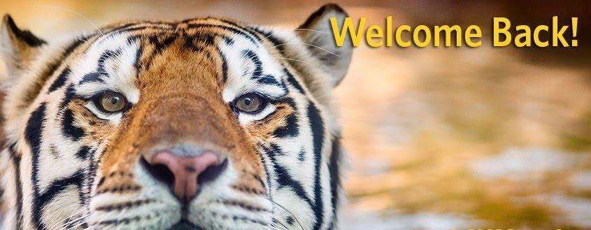 Image result for welcome back tiger pix