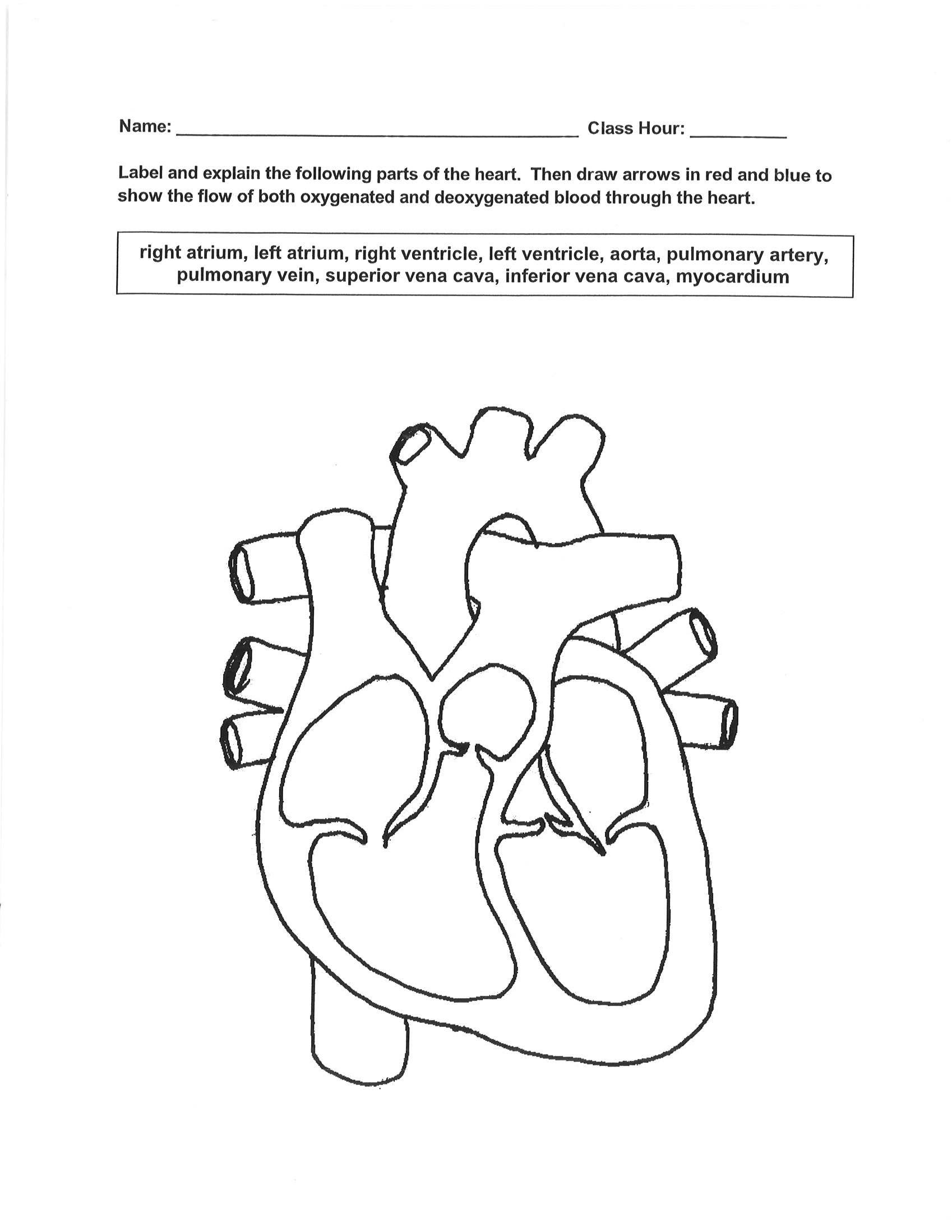 Printables Circulatory System Worksheet circulatory system worksheets for high school intrepidpath medical detectives