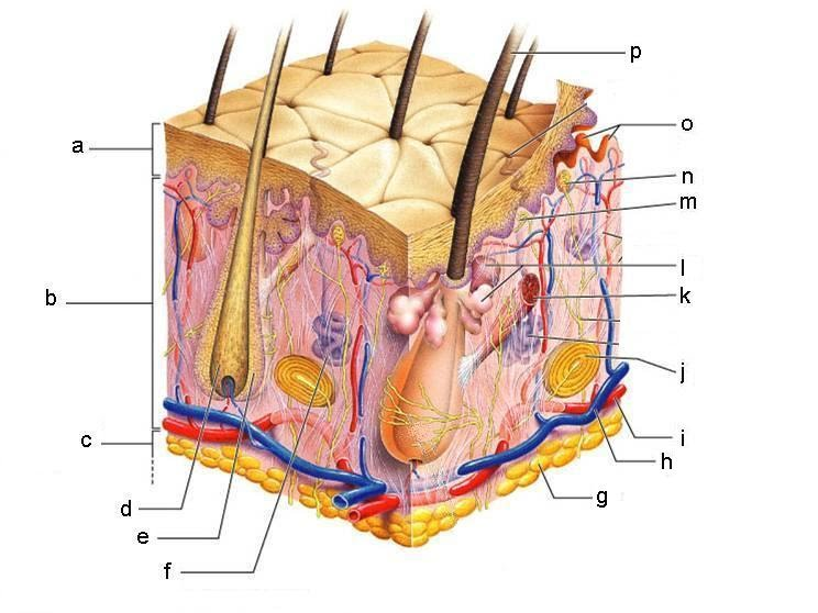 integumentary mr moore rh sites google com