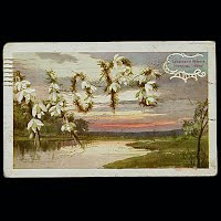 Antique 1909 Language of Flowers Post Card
