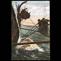 Antique Post Card, Sperm Whaling, New Bedford, Mass 1910