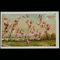 Antique Language of Flowers Post Card