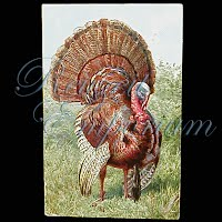 Antique 1909 Thanksgiving Post Card