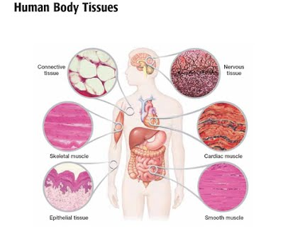 Cells & Tissues - Ms. House\'s Classroom Website