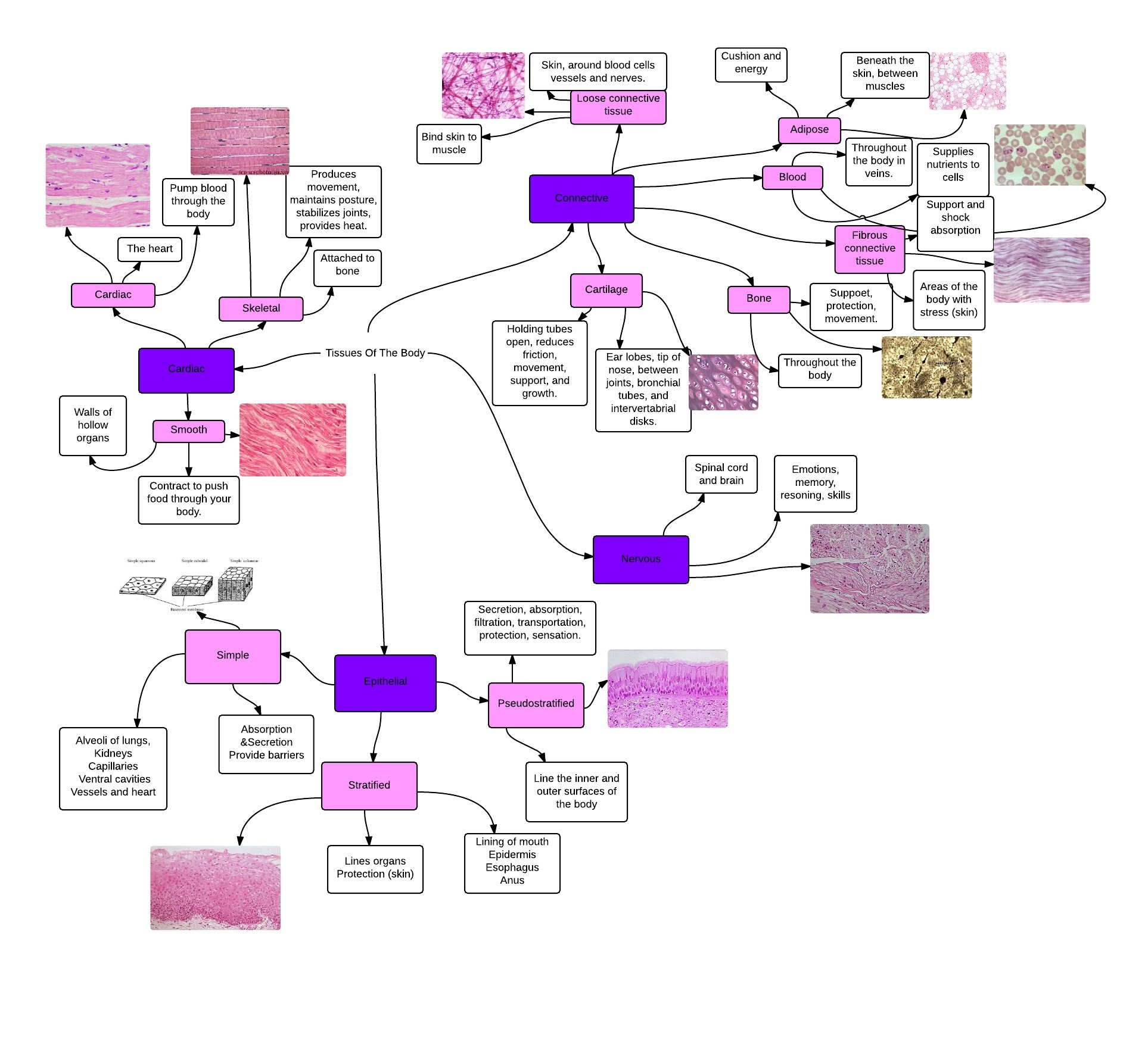 Concept Map - Melissa Smith Anatomy & Physiology