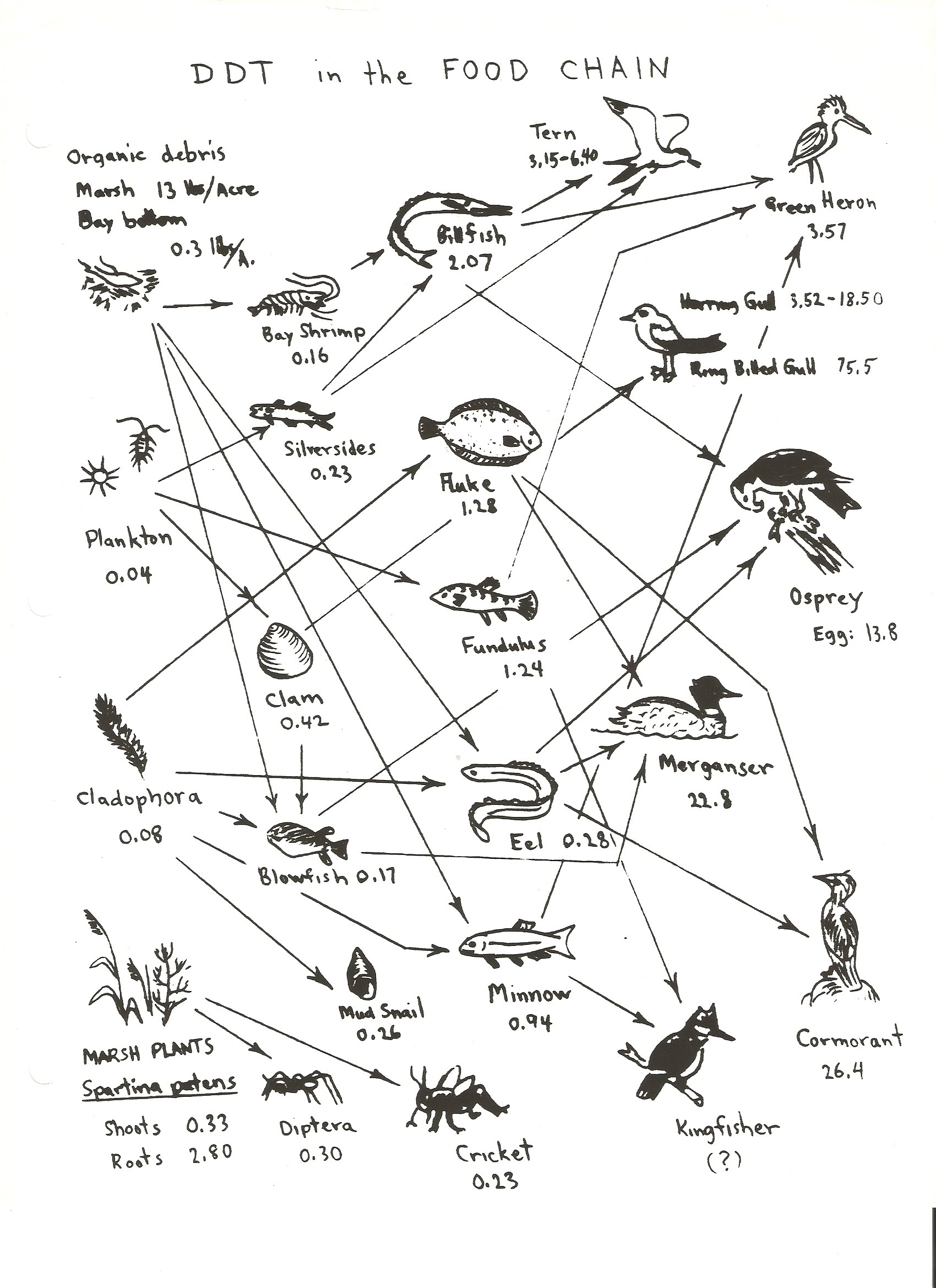 Printables. Food Web Worksheet High School. Mywcct