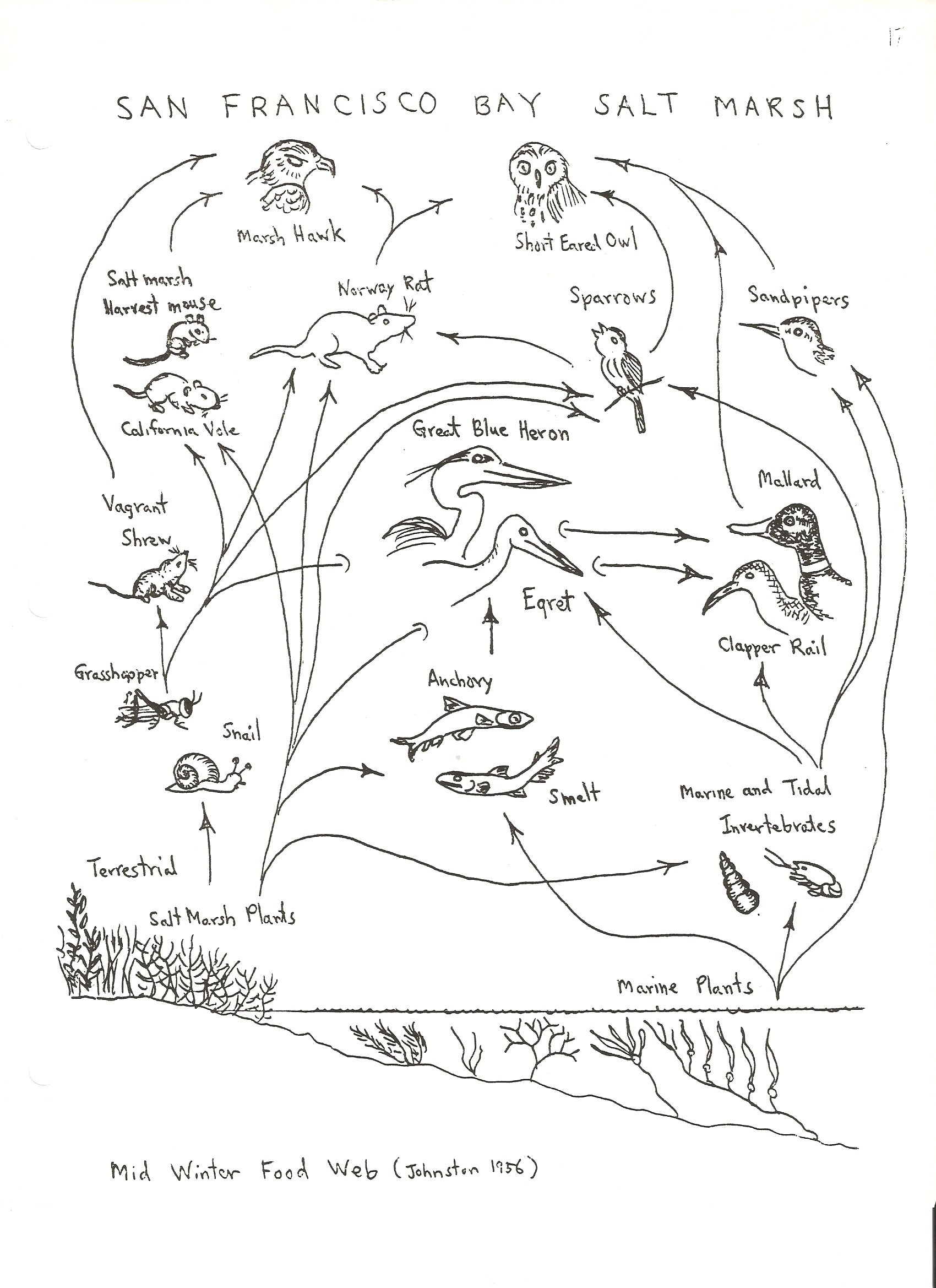 Food chain and food web worksheets high school