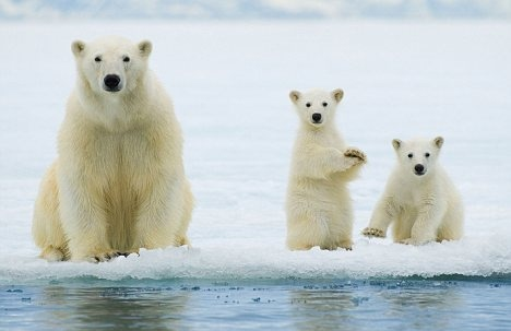 Arctic Tundra ANWR