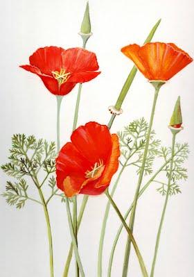 The california golden poppy california poppy ruth brunstetter mightylinksfo